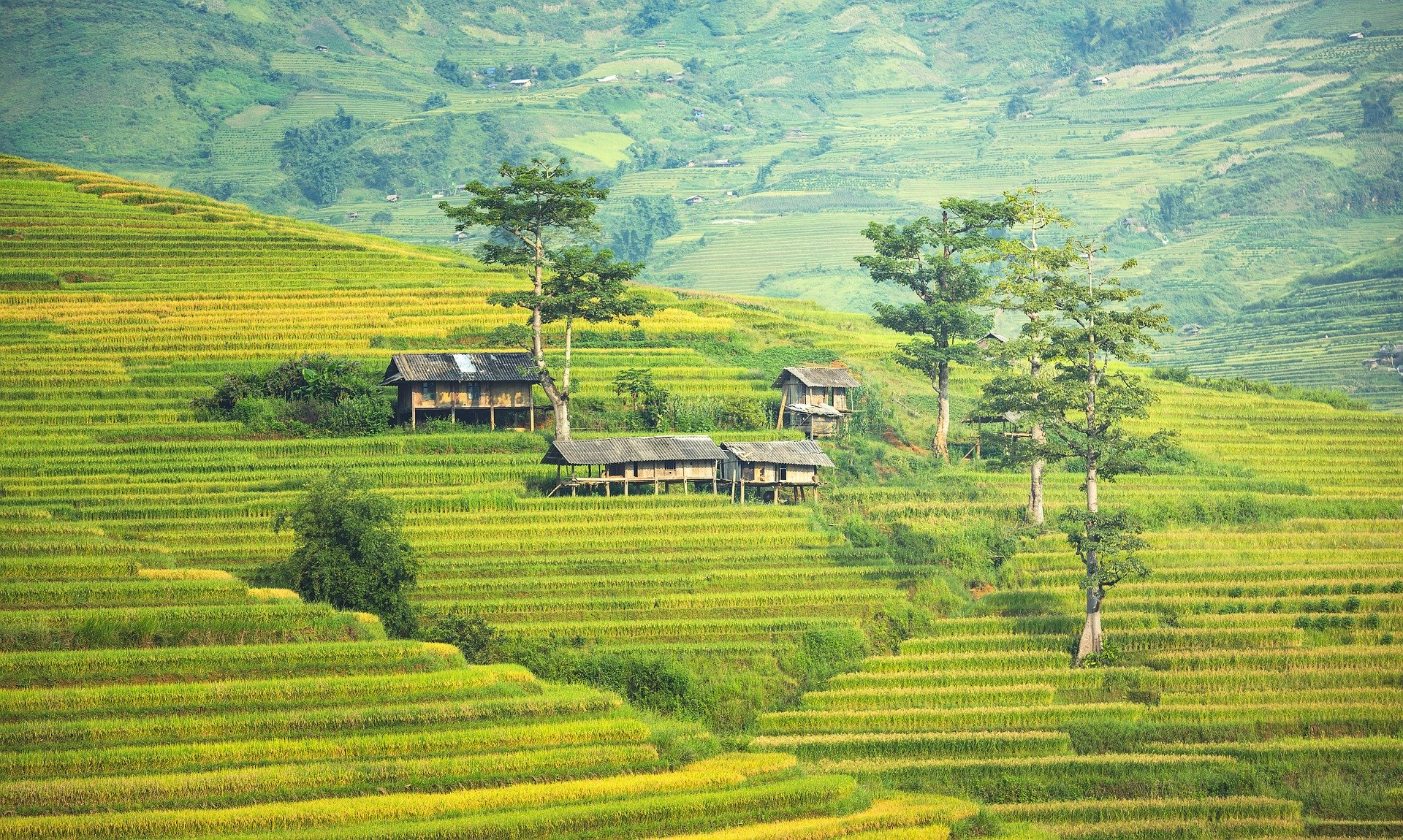 Rice terraces in Sapa.