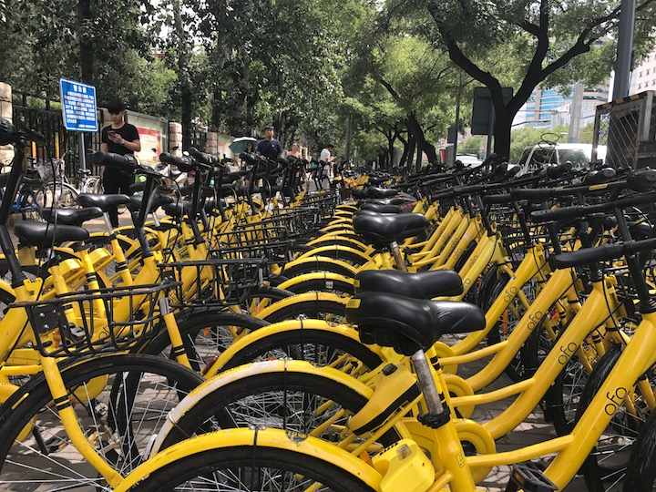 OFO rental bikes lined up