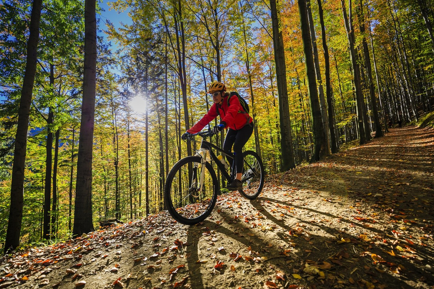 Four reasons to ride: what type of cyclist are you?